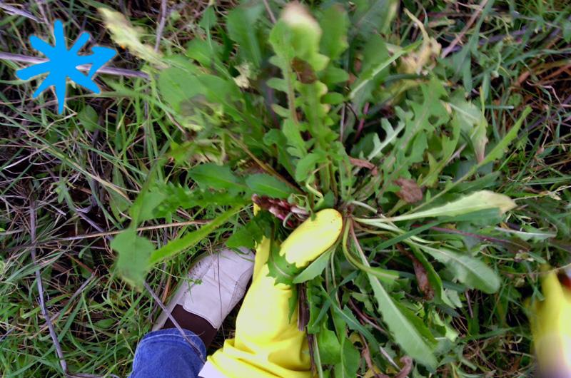 Camminare nel Salento alla ricerca di erbe spontanee